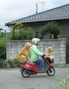 drive_dog